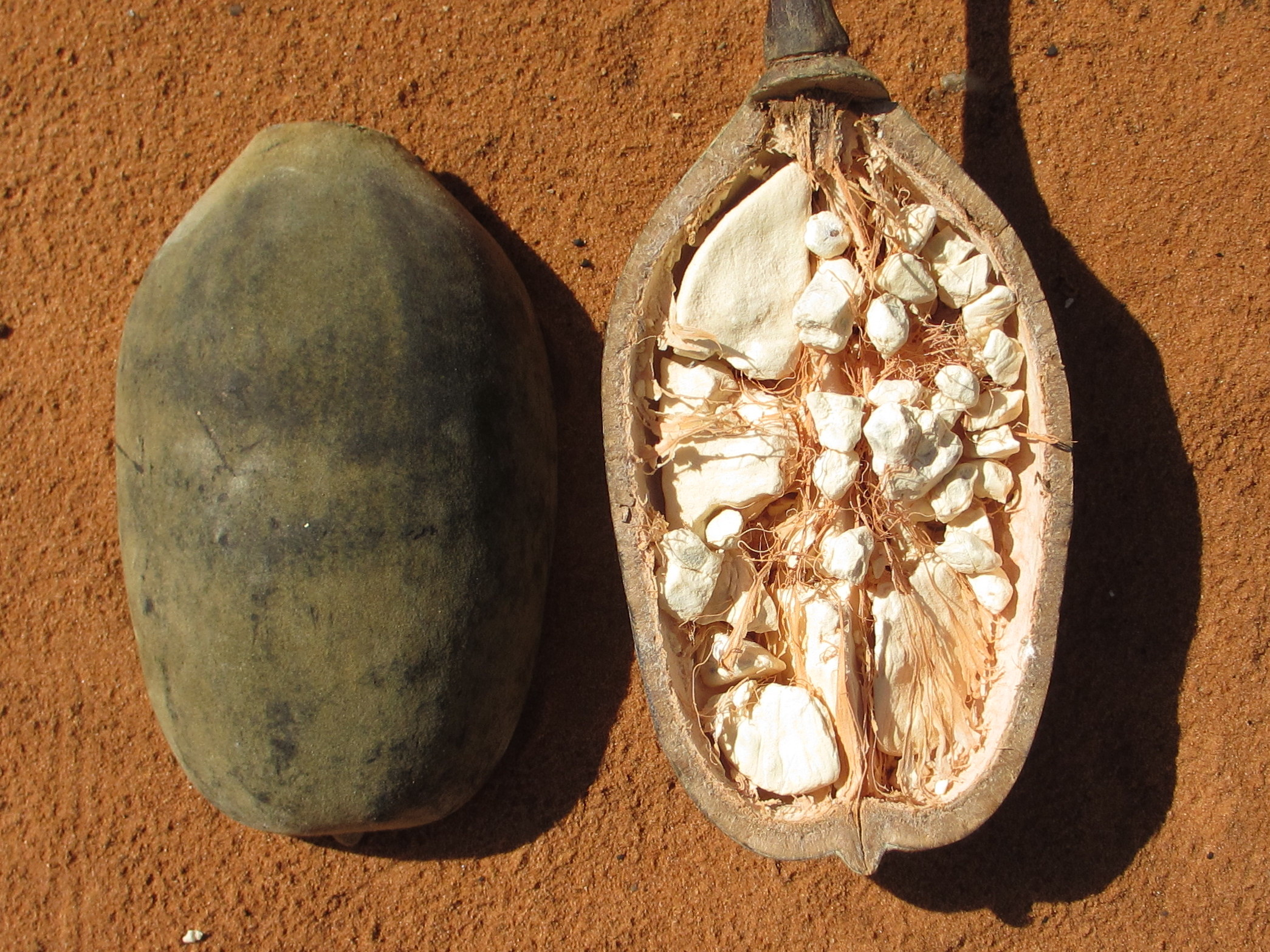 This baobab fruit was bought in the market of Pemba town, northern Mozambique. Photo taken by Ton Rulkins on May 10, 2013