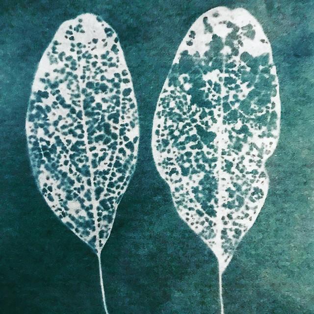 Skeletonized Sassafras Leaves