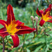Taplow   |   Red and Yellow Flower