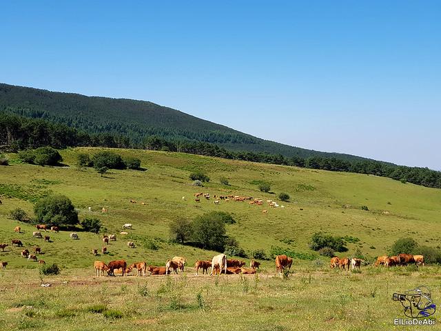 Valle de Juarros y Sierra de la Demanda en 4x4 (6)