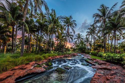 bahamas nassau theatlantis resort atlantis water waterpark palmtrees sunrise coloful rock green