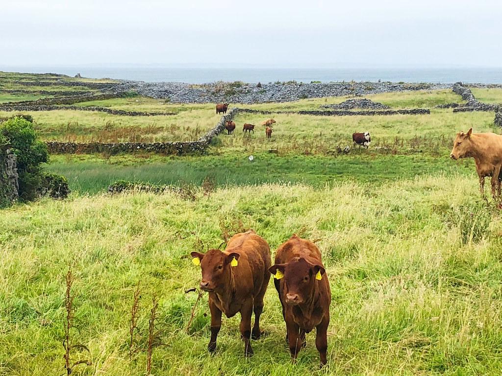 Visiting Inishmore – The Star of Ireland's Aran Islands