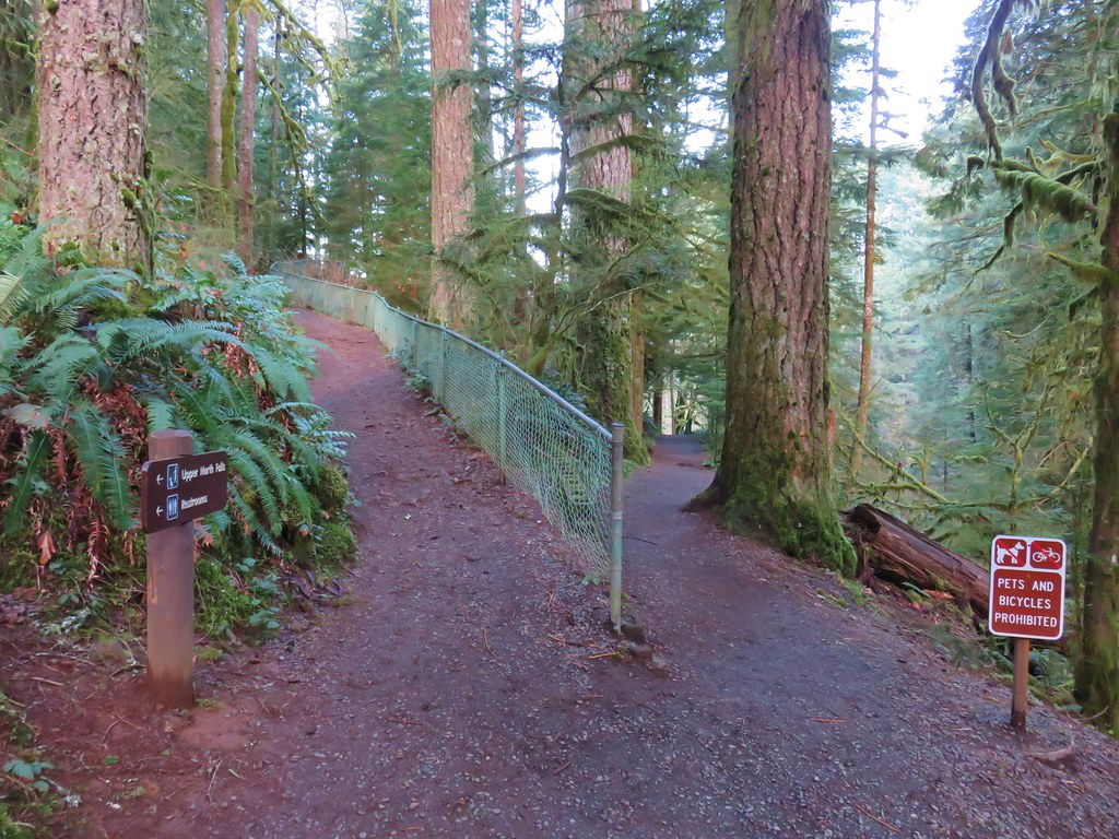 Trail junction in Silver Falls State Park