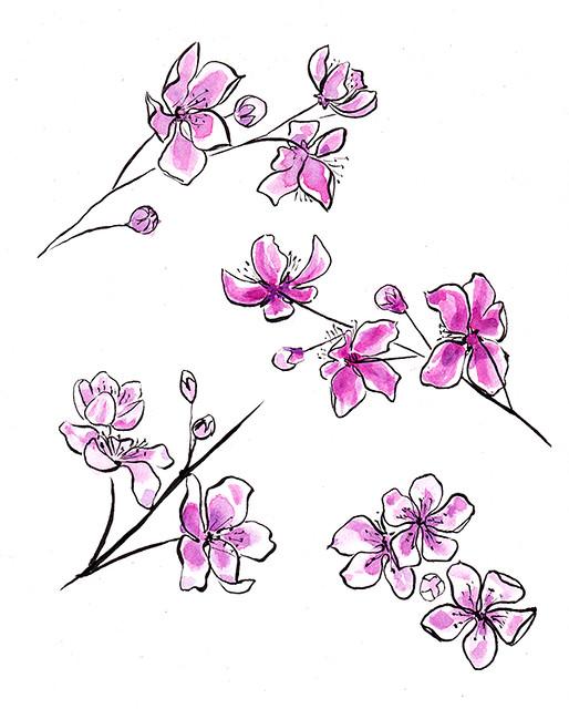 blossom sketch 2