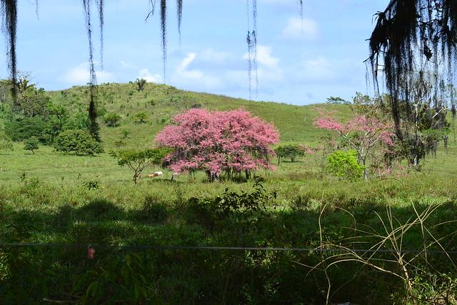 020-1 Árvore florida