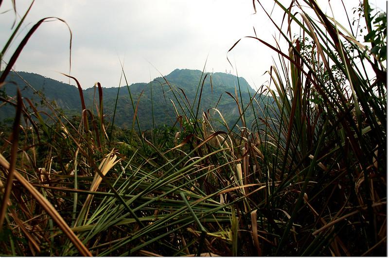 白水溪山山頂南望枕頭山