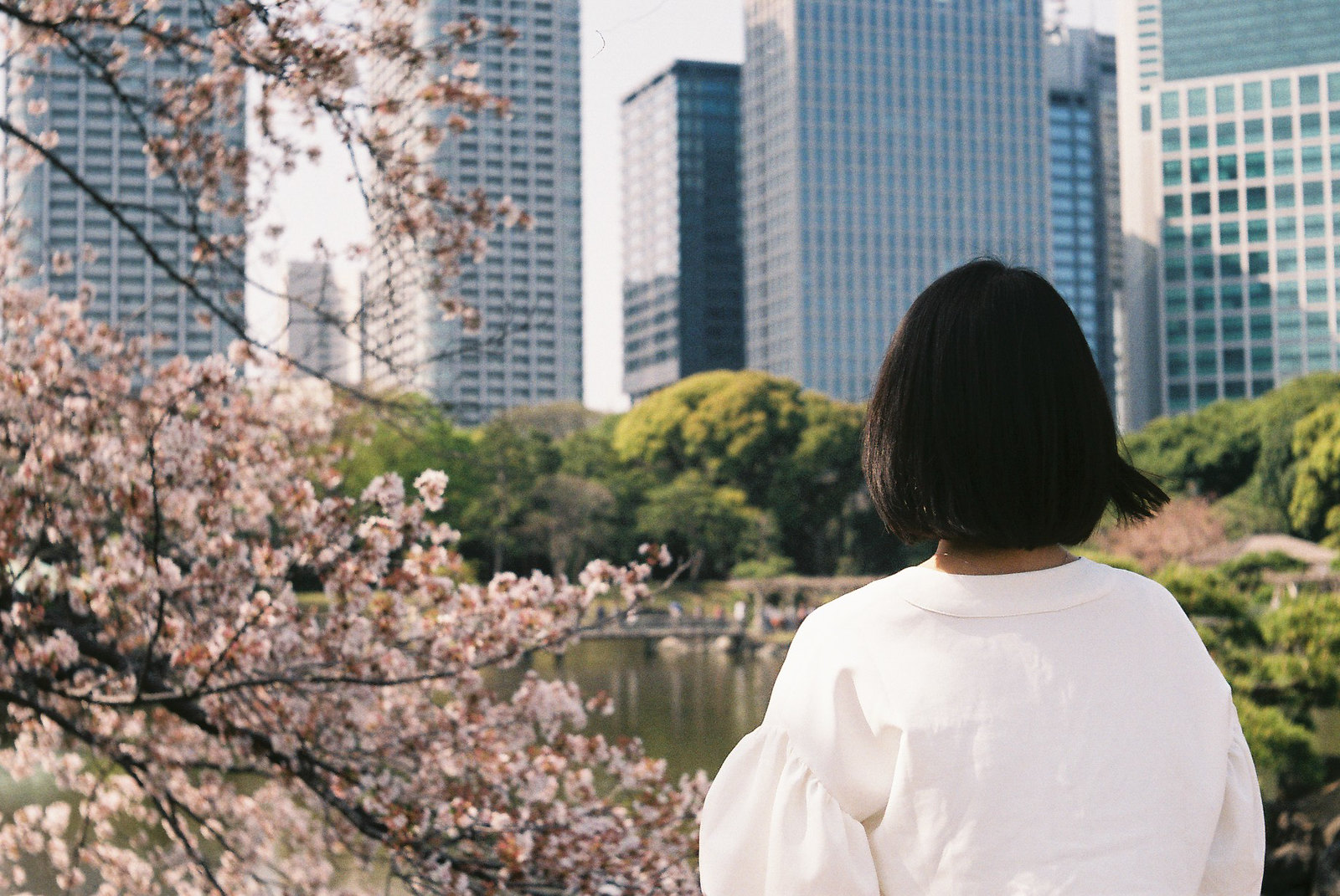 Cherry blossoms with wife