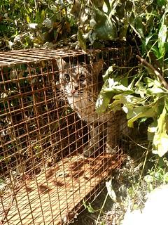 CT Bobcat Project 02
