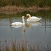 Pond Life (2)