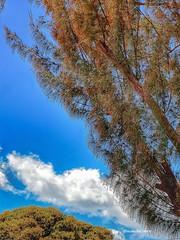 Sous le filao A l'éternité  #Guadeloupe #Guadeloupeforever #saintclaude #saintclaudeguadeloupe #memorylane #memory #family #restinpeace #love #frienship #cimetieredesaintclaude #filao #tree #sky #bluesky #sunnysky #hope #retourauxsources #vie #life #spiri