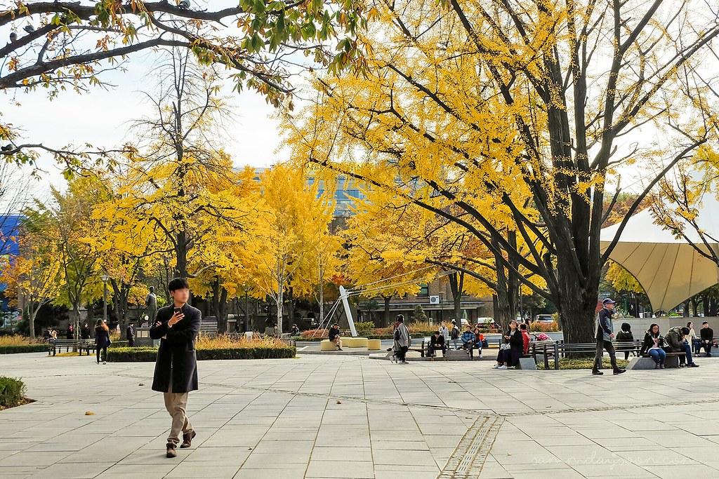 ginko_tree_seoul_autumn