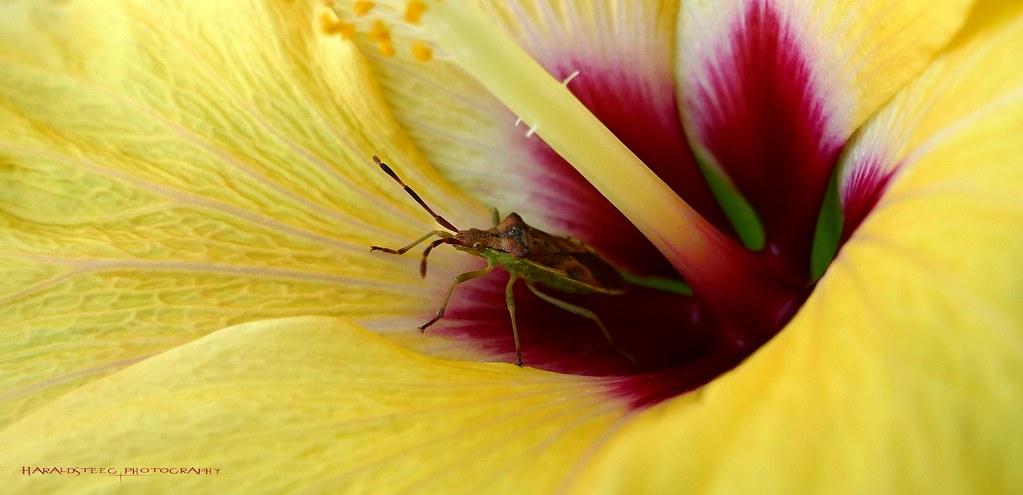 die Blüte und ihr Gast