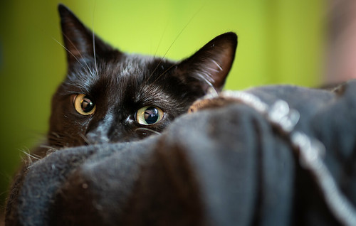 Jake peeking over the edge of his cat bed | by Wade Tregaskis