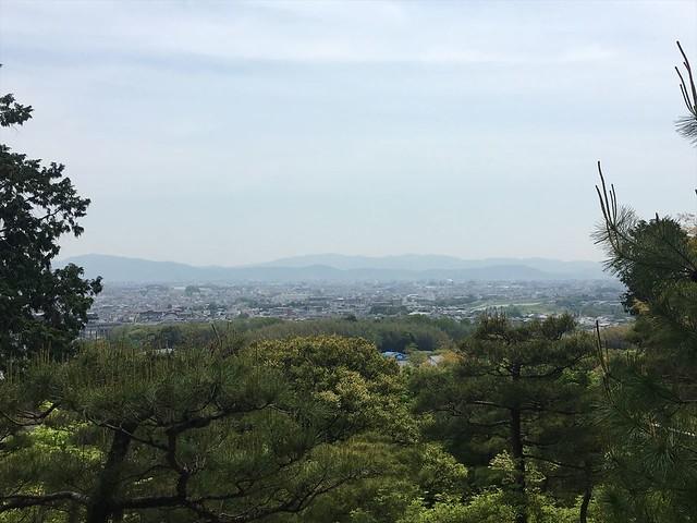 常寂光寺青もみじ多宝塔5