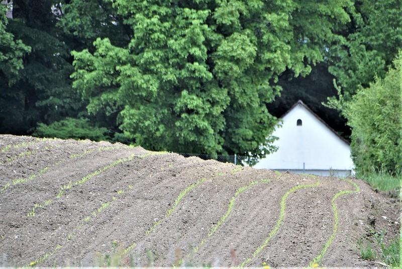 Crops 02.05 (2)