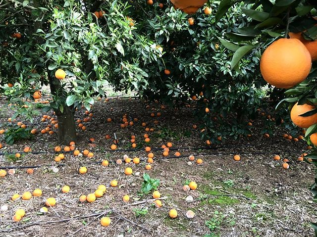 Nevam laranjas 🍊