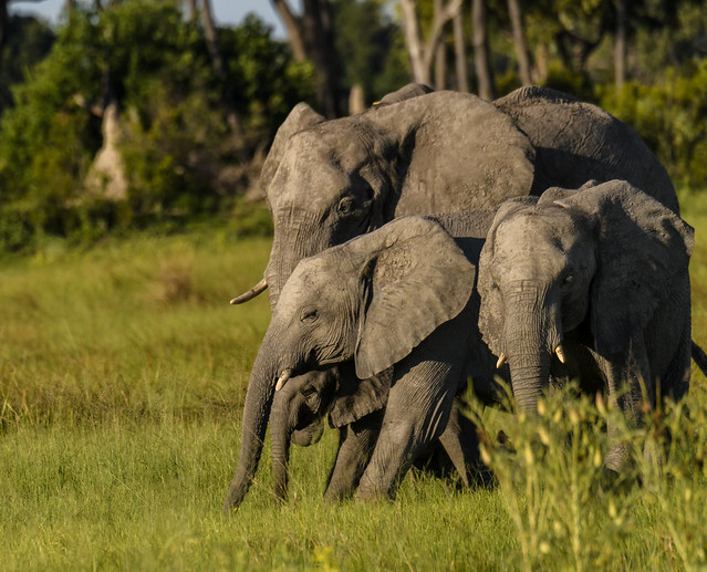 It Takes A Family To Raise A Baby Elephant: