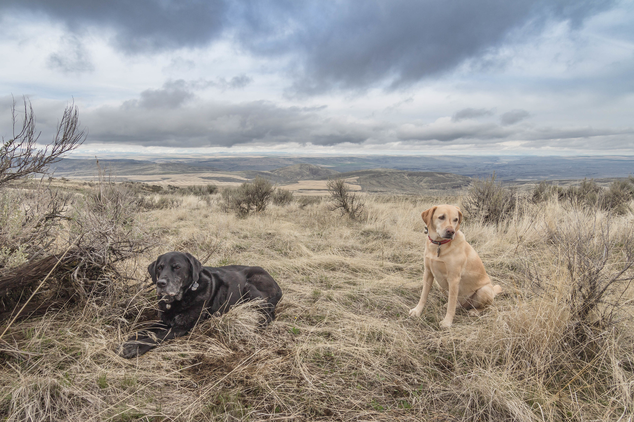 Desert dogs on Beezeley Hills