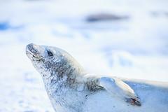 Antarctica-111124-971