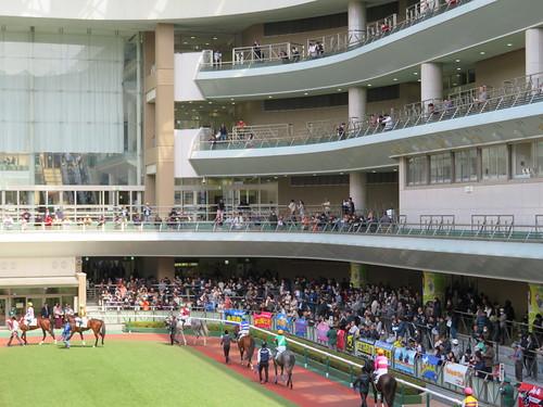 福島競馬場のパドックを見上げる