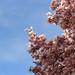 Spring at Danube Park
