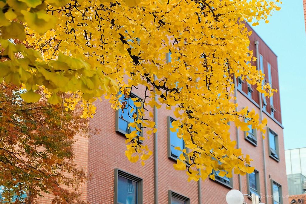 autumn_hoegi_seoul