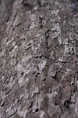 Rata Tree Detailed #2