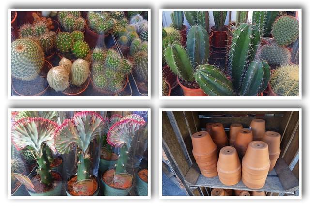 cacti-etc-