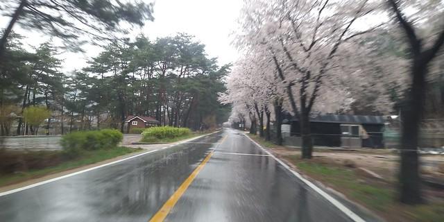 꽃비 내리는 봄날