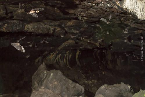 Cueva El Salitre (interior)