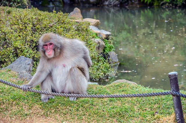 Monkey on rope