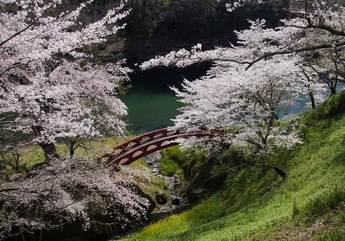 Sakurabuchi Park