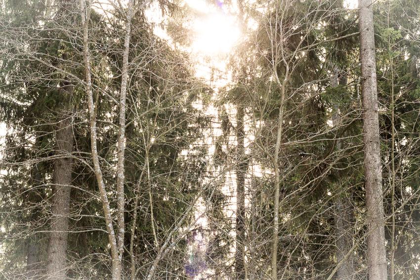 aurinko ja puita