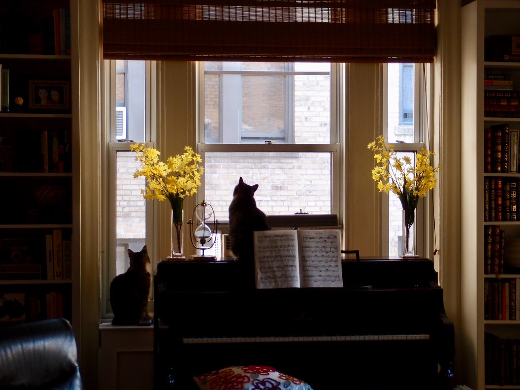 Two cats in a window, New York City 2013