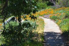 A Trail Under the Oak