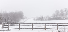 Fence In  a White Landscape #HFF