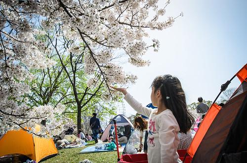 桜を見る娘
