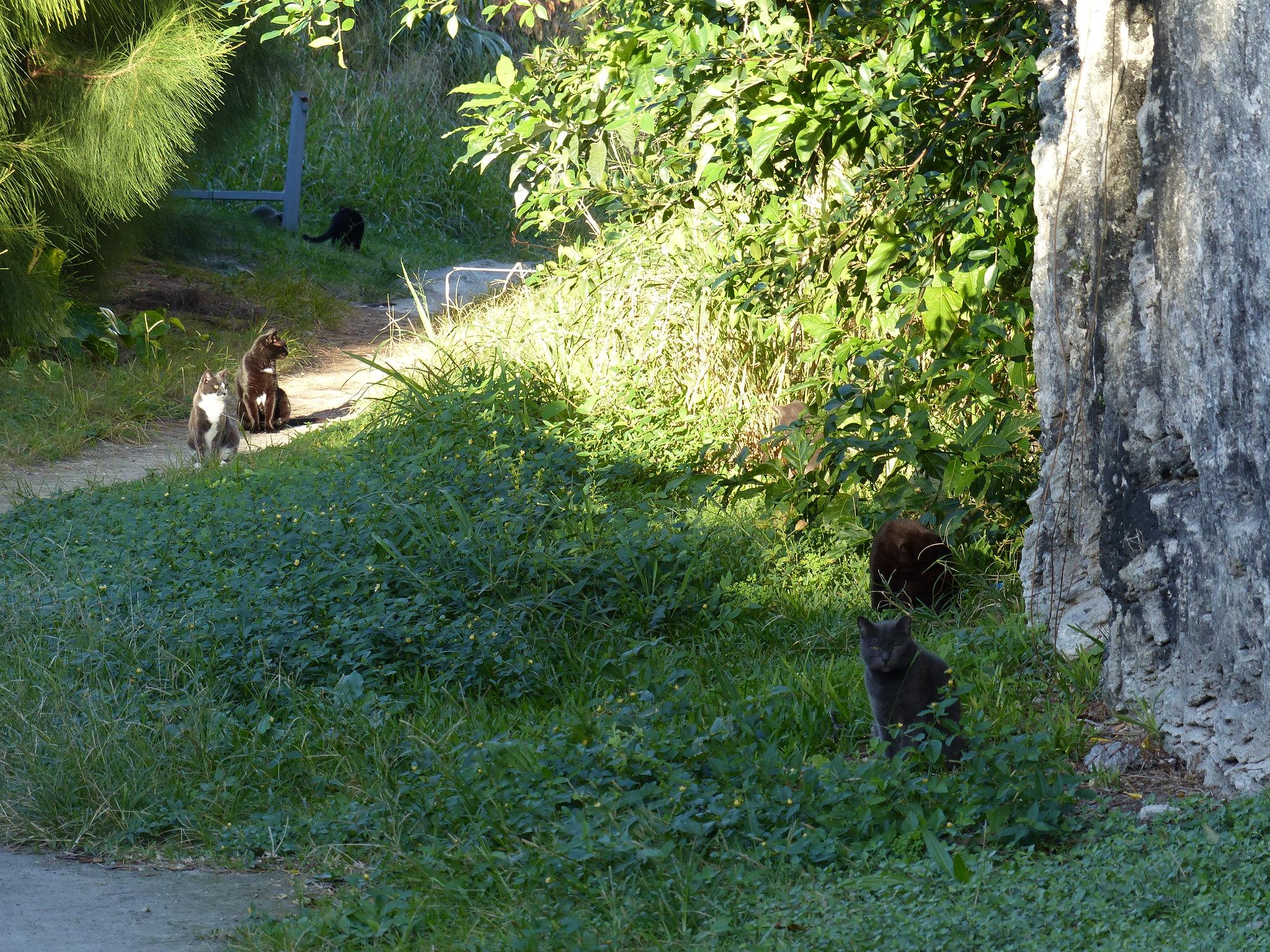 Bermuda Railway Trail feral cats