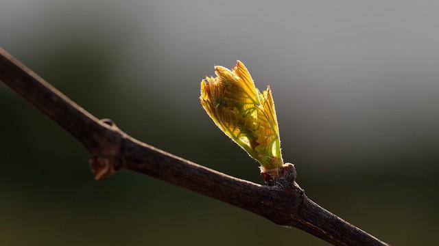 Details of Spring