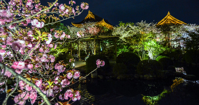 Toji side building blossoms