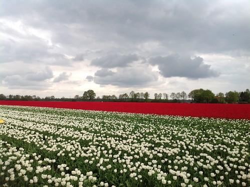 Lente in Drenthe - Foto: Tiny Post.
