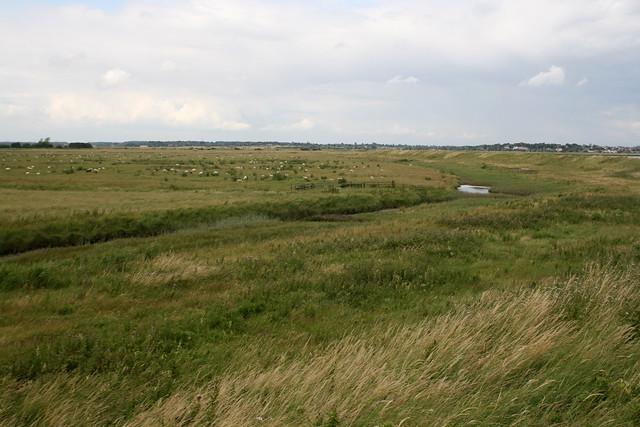 Sudbourne Marshes near Aldeburgh