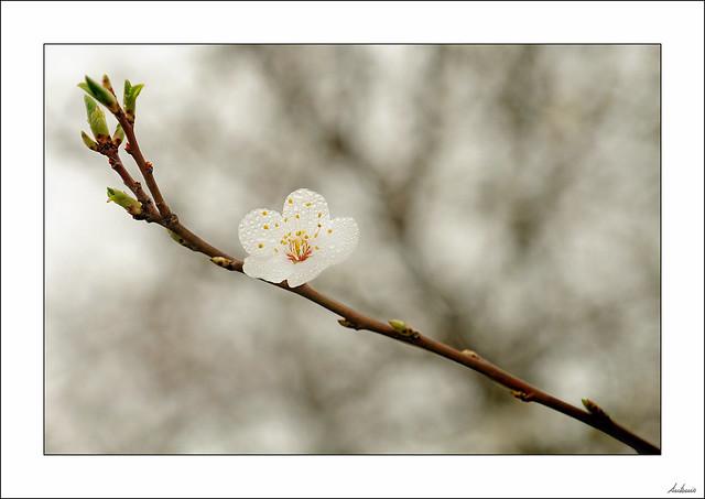 Influencias en primavera