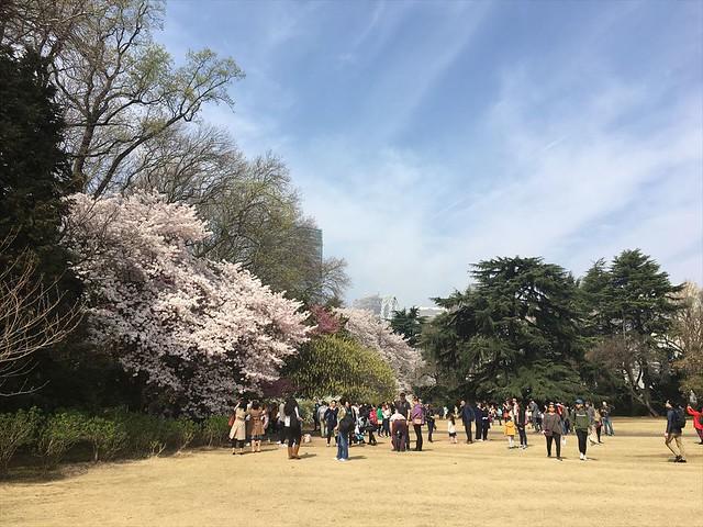 shinjyukugyoen01_R