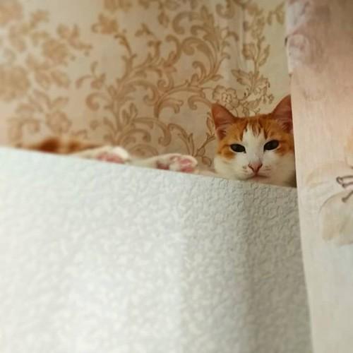 cat_on_top