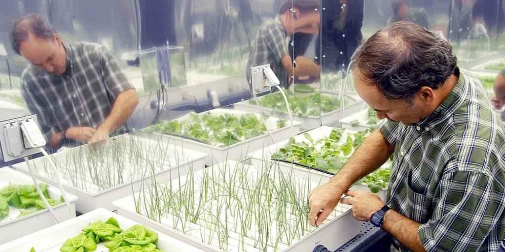 Des scientifiques cultivent des légumes sans terre ni lumière ou pesticides dans l'Antarctique