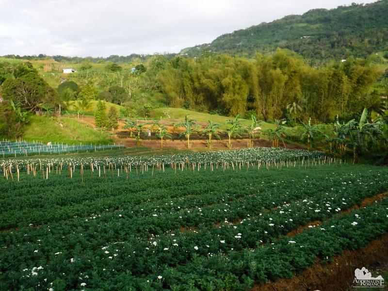 Flower farms of Sudlon