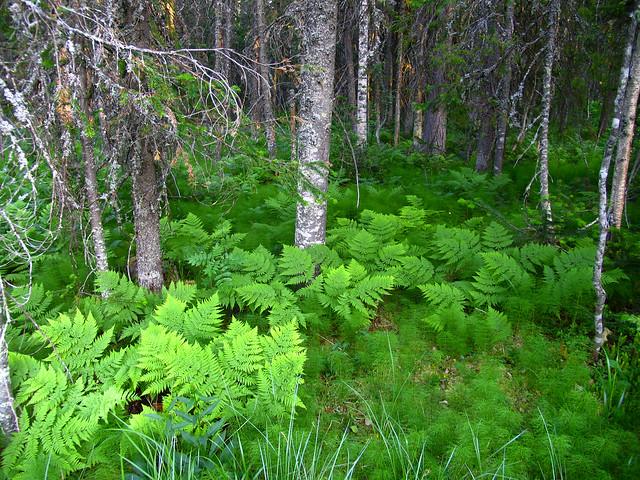 Берегите деревья и травы, Canon POWERSHOT PRO1