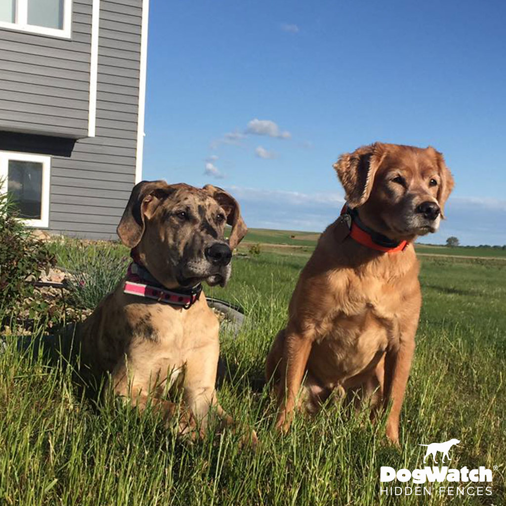 Hidden Dog Fence Customer Photo Gallery | DogWatch® by
