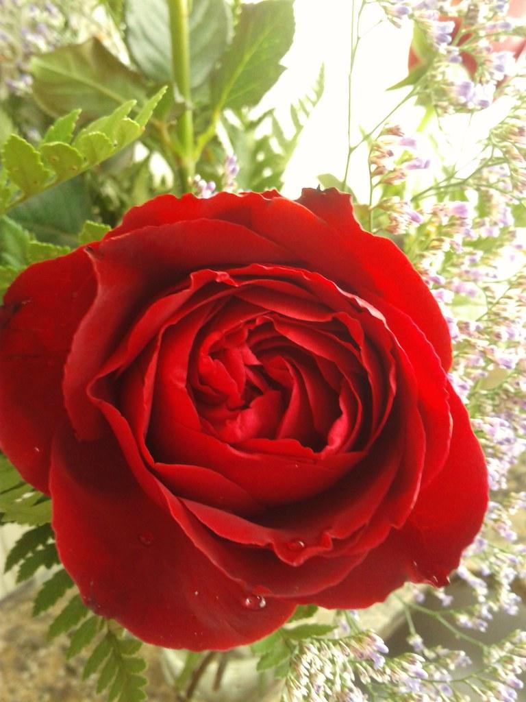 Que Lindas Son Las Flores K B L Luccia Flickr